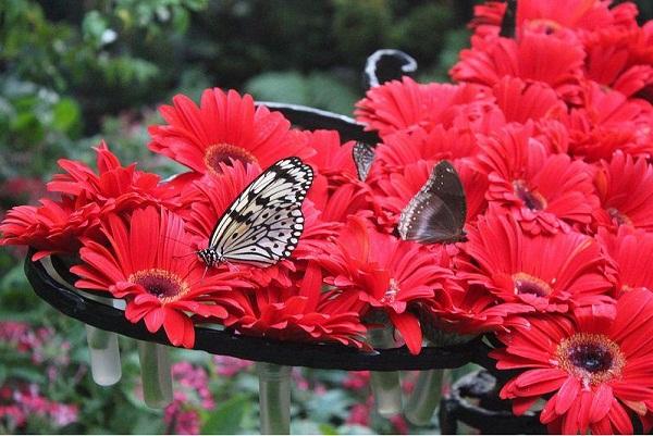 Hấp dẫn công viên bướm và vương quốc côn trùng