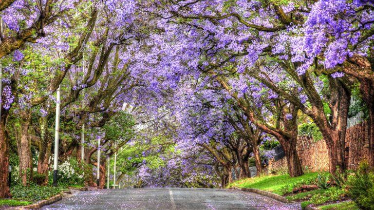 Những nét văn hóa độc đáo của người dân Nam Phi