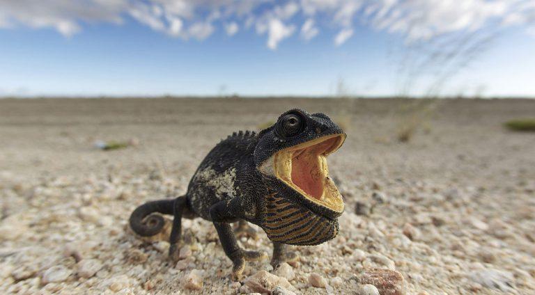 Điều bất ngờ ở những sa mạc ấn tượng nhất thế giới