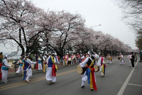 Du xuân đến Hàn Quốc chiêm ngưỡng những cây hoa anh đào thôi