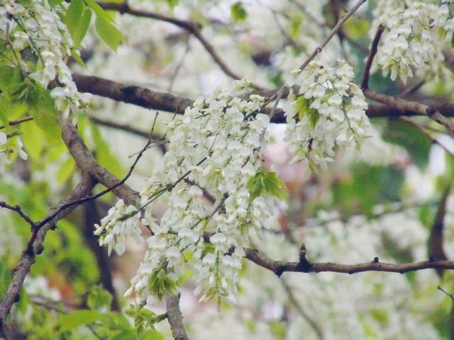 Những loài hoa ngắm vào mùa xuân là đẹp nhất