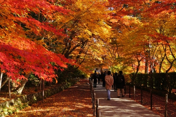 Người nhật thường dạo ngắm cảnh vào mùa thu