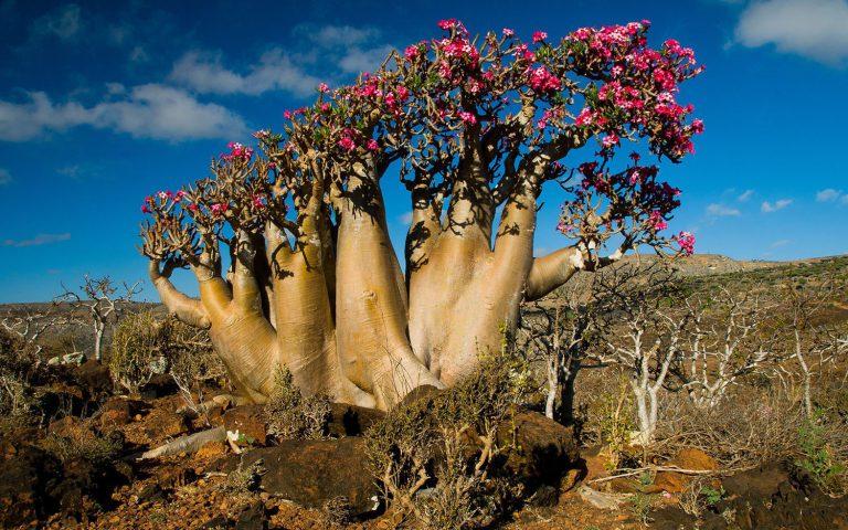 Khám phá những bí ẩn đằng sau những hòn đảo được xem là sự kỳ diệu của tạo hóa