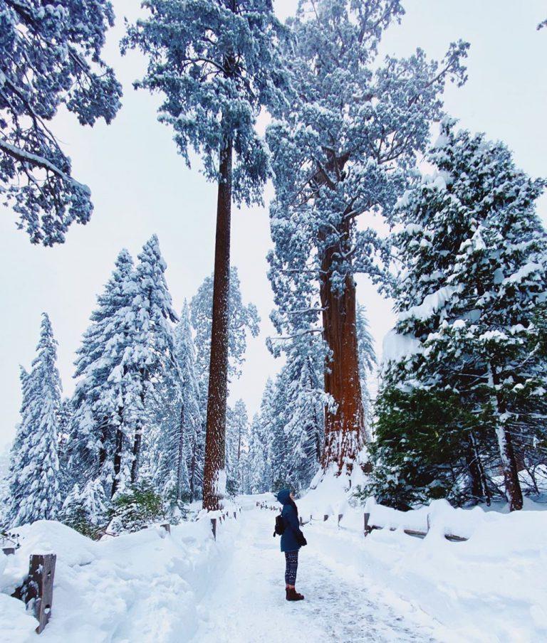 Công viên Sequoia National Park vào mùa đông với khung cảnh tuyết trắng
