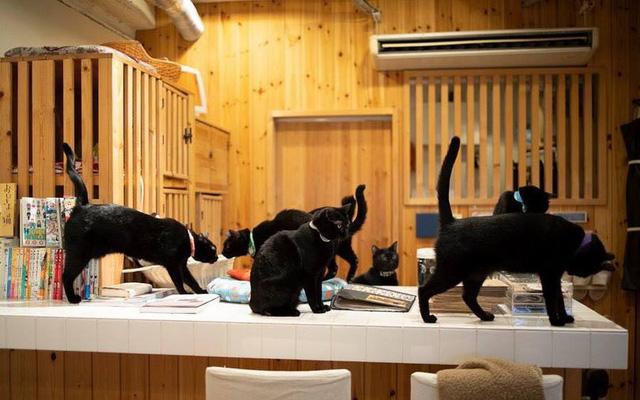 Ghé Nhật Bản khám phá quán cà phê dành cho mèo đen độc đáo