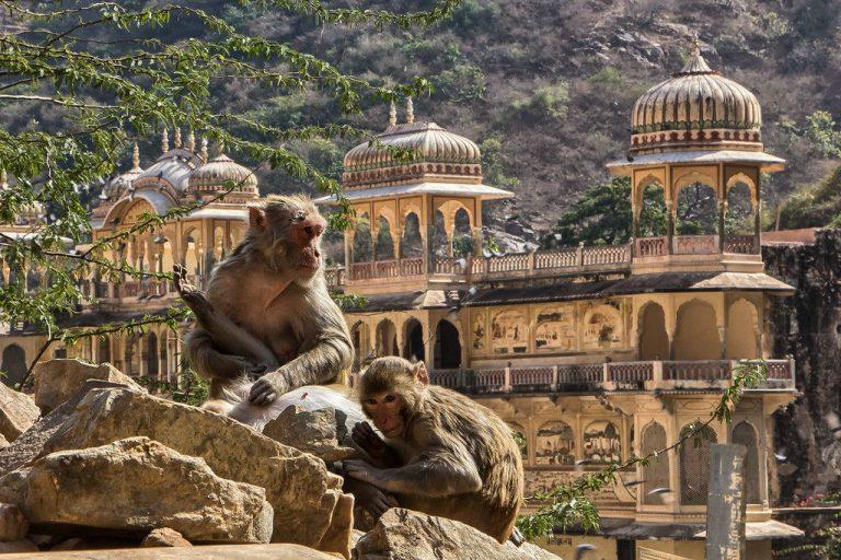 Đến thành phố Jajpur Ấn Độ chiêm ngưỡng cung điện cho khỉ