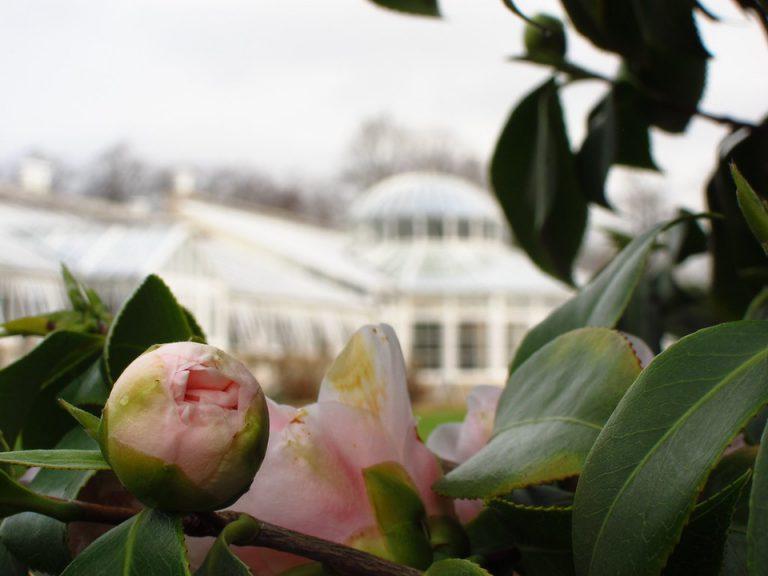 Chiêm ngưỡng loài hoa hiếm có trên thế giới